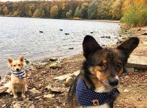 Weihnachtsgeschenke für Veganer und Tierfreunde Hunde Halstücher Ella und Fritz