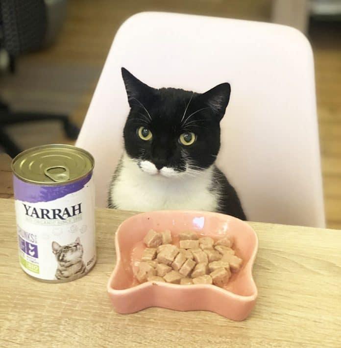Bio Katzenfutter von Yarrah Futter für Katzen