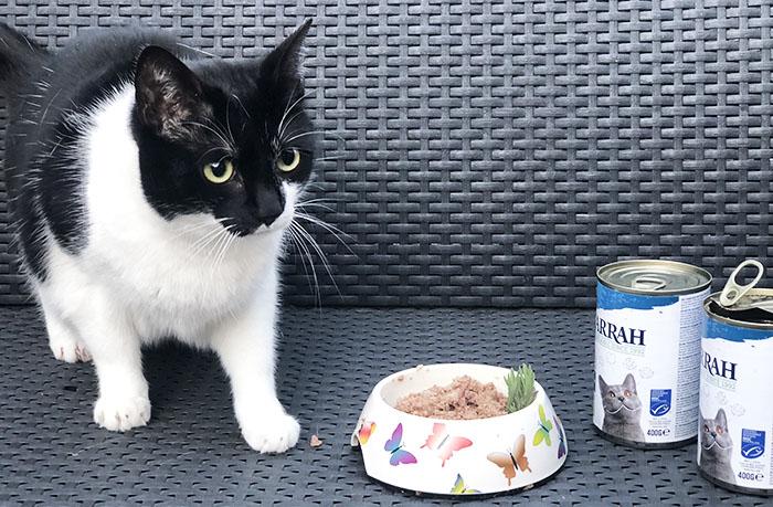 Bio Katzenfutter Katzennahrung Tiernahrung Futter für Katzen Nassfutter