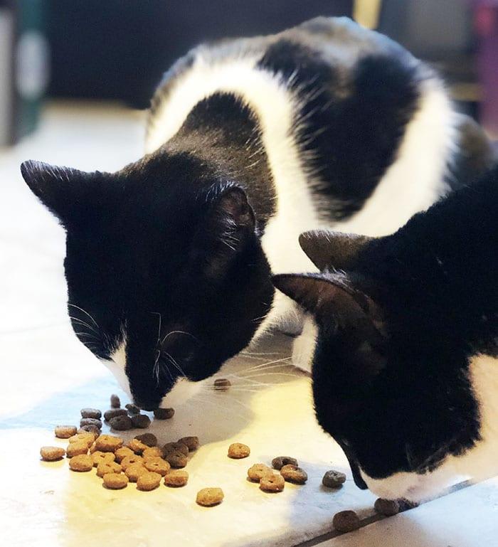 Bio Bio Trockenfutter für Katzen Yarrah