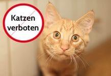 Darf Vermieter Katze verbieten
