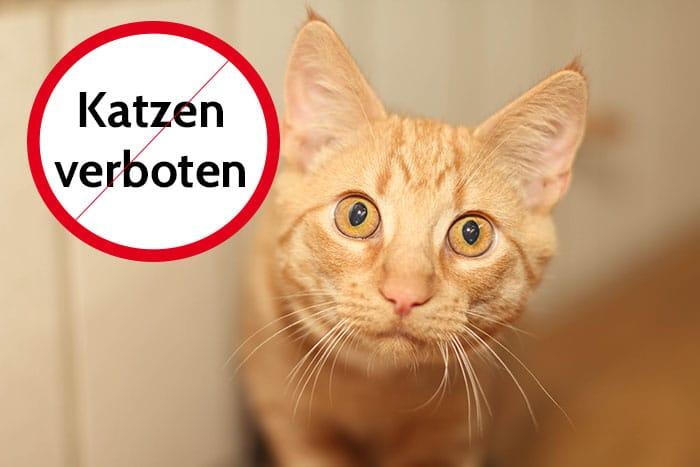 Darf Vermieter Katze Verbieten 4 Grunde Fur Ein Katzenverbot