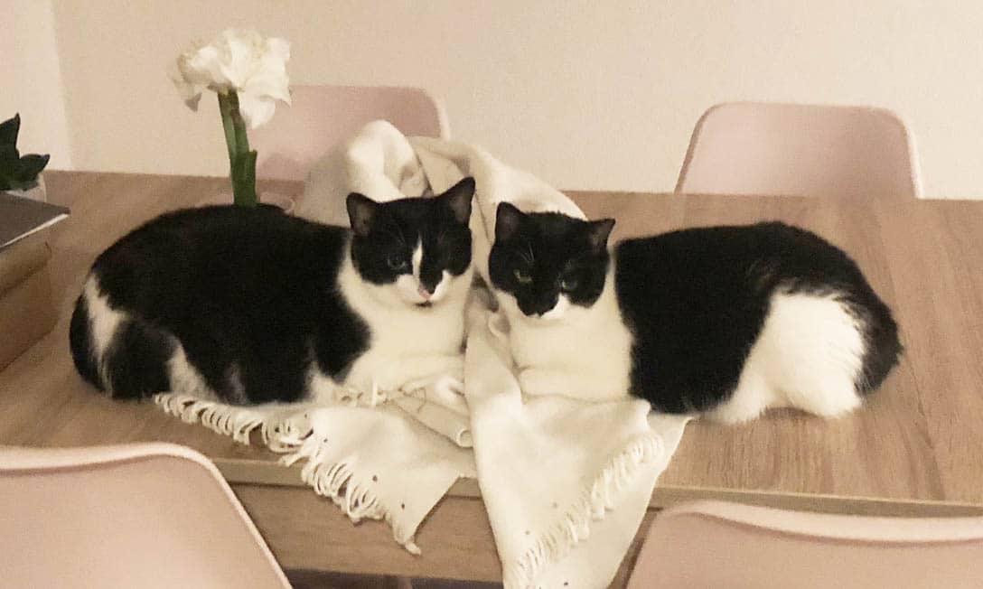 Darf ein Vermieter Haltung von Katzen in Wohnung verbieten ja oder nein