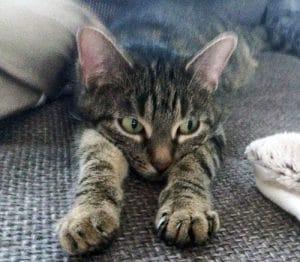 Katze Frust Angst Stress Gründe für Unsauberkeit Katze macht ihr großes Geschäft nicht ins Klo