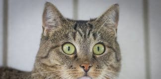 Katzen impfen ja oder nein Impfung Katze Kritik