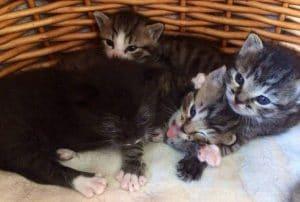 Katzen impfen ja oder nein Wiederholungsimpfung
