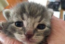 Katzenbaby Kitten Namen Katzennamen männlich