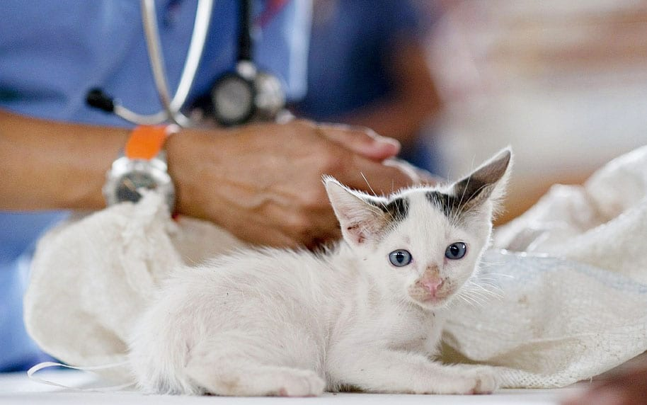 Kitte impfen ja oder nein Grundimpfung Grundimmunisierung sinnvoll Tierarzt