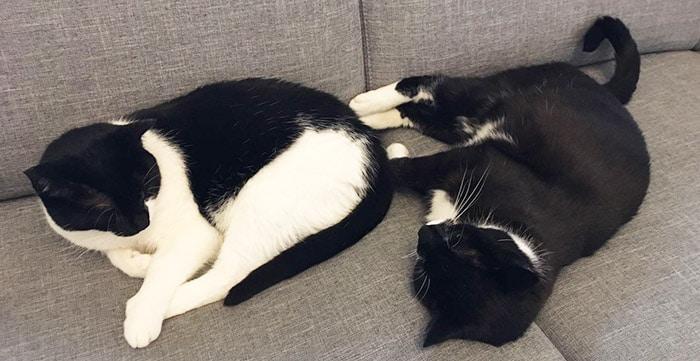 Mehrkatzenhaushalt Katze pinkelt unsauber Katze macht großes Geschäft nicht ins Klo