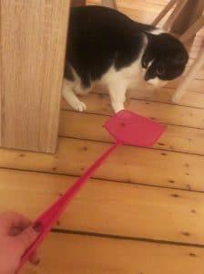 expertentipp ängstliche katze