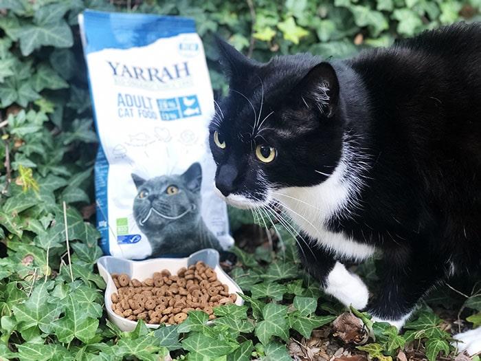 Bio Futter Katze
