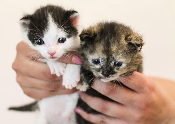 geschenke für kitten tierheim kittenzeit geschenk