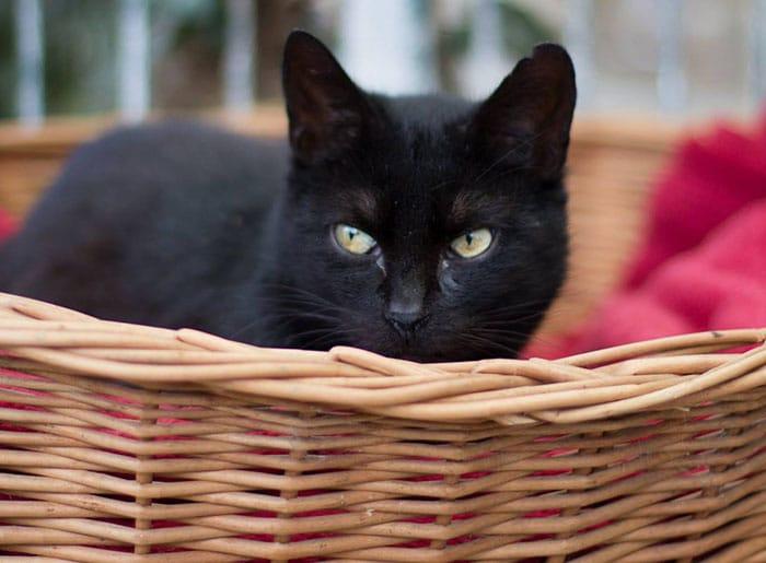 neue katze aus versteck locken