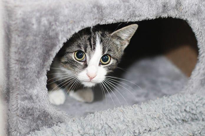 neue katze versteckt sich höhle katze hat angst