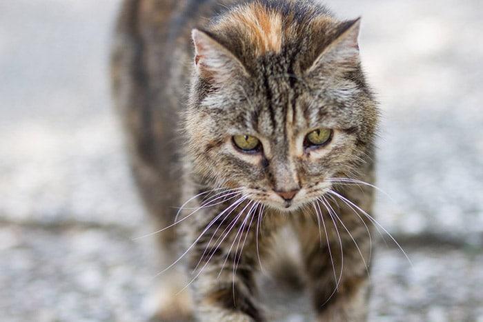 wie alt ist meine katze mit freigang