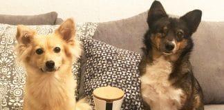 Furbo Hundekamera Haustier-Kamera