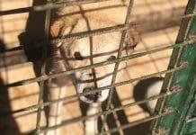 Hunde retten aus Tötungsstationen