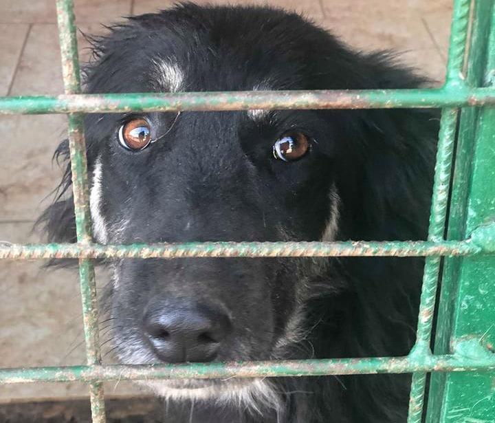 Hunde aus der Tötungsstation Rumänien Tierheim