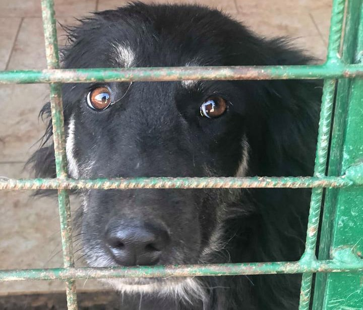 Hunde aus der Tötungsstation: Retten oder sterben lassen?