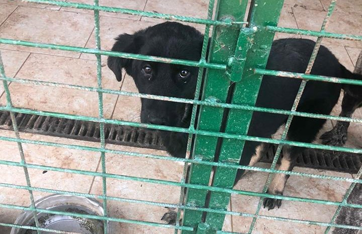 Hund aus Tötung Rumänien