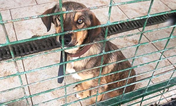 Hund Shelter Rumänien