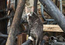 Straßenkatze Welttierschutzgesellschaft Schütze deine Katze