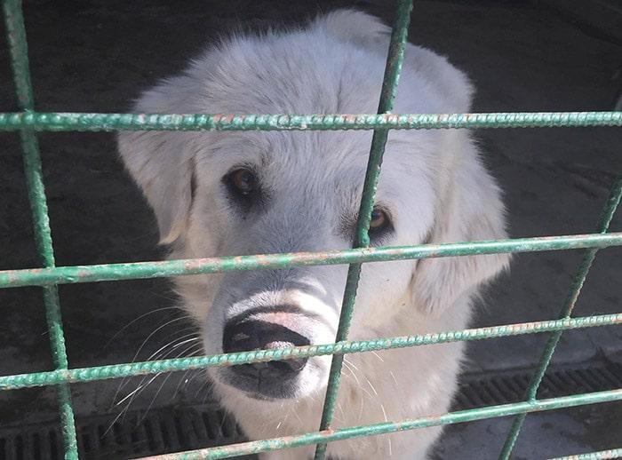 hunde in killing shelter
