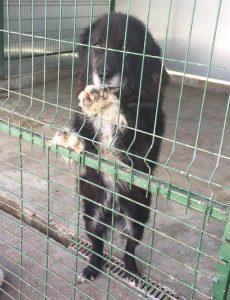 tötungsstation rumänien hunde