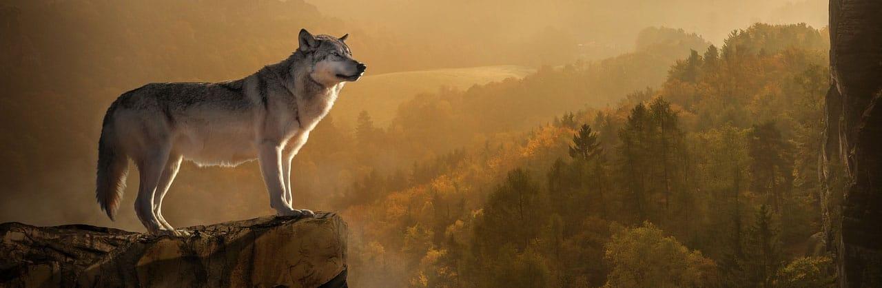 wolf marketing hundefutter