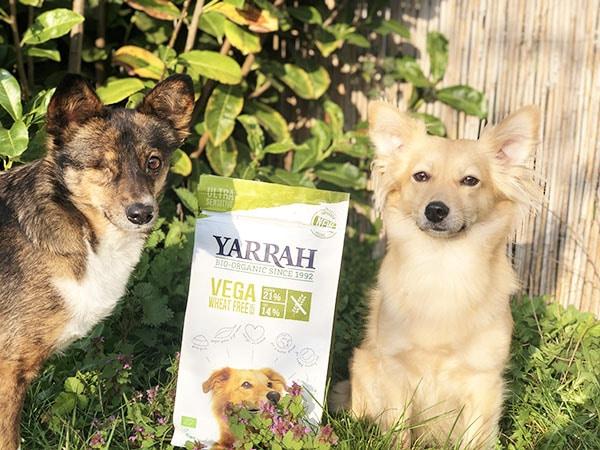 veganes futter für hunde mit allergien