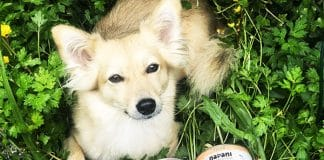 Hundefutter Bio Nass napani
