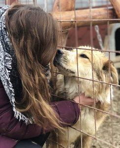 Tierschutz-Shop Hunderettung Europa