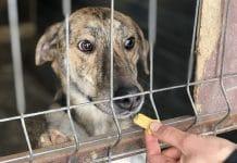 Tierschutzshop seriös unseriös