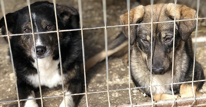 Tierschutz-Shop kaltes Geschäft mit Tieren in Not
