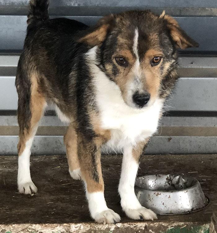 Tierschutz-Shop Betrüger Abzocke