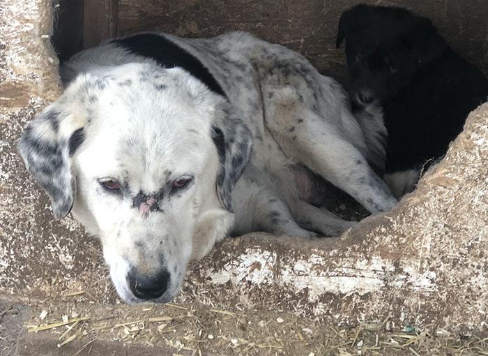 Spendenplattform Tierschutz-Shop seriös