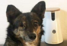 Hunde Überwachungskamera