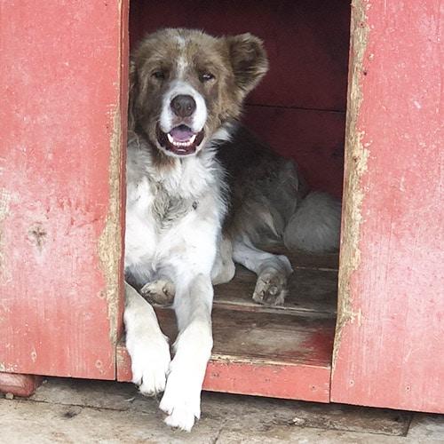 hund adoptieren tötungsstation