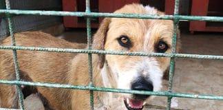 rumänien tierheim tötungslager