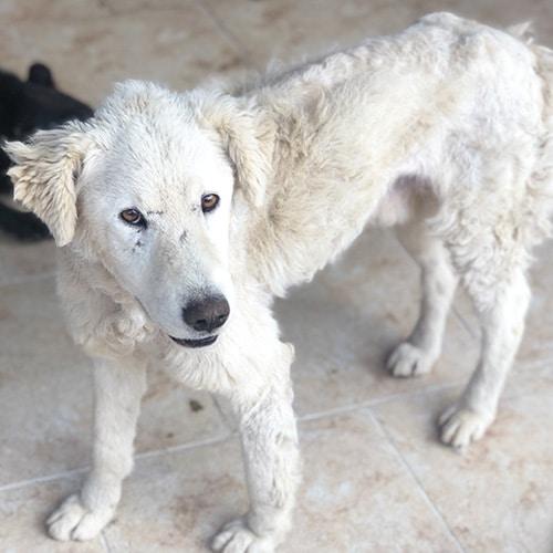 straßenhunde rumänien tierheim