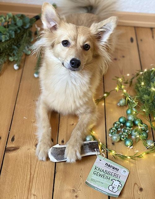 Geschenkidee für Hunde und Katzen