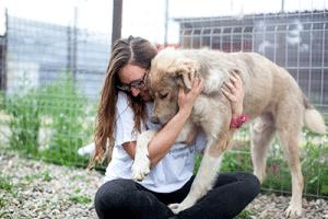 Seriöser Auslandstierschutz Rumänien Betrug Tierheim